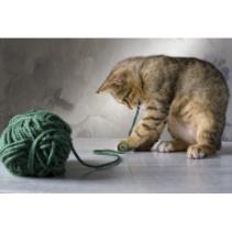 il est idéal de procurer à son matou du jouet pour chat